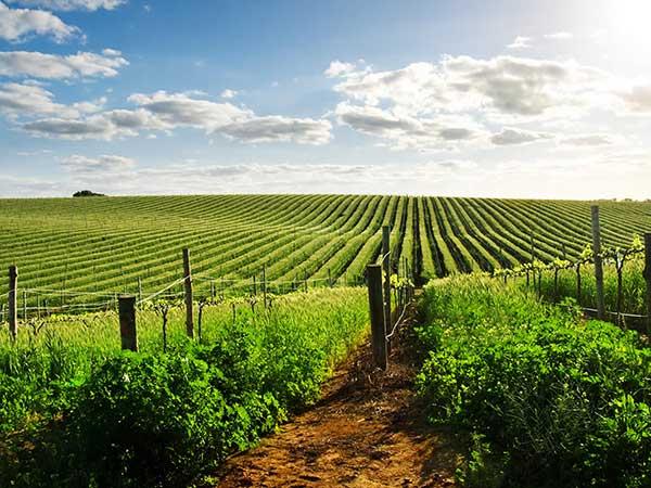 prodotti-agricoltura-disinfestazione-terreno-ravenna